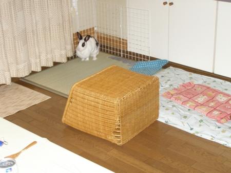 f:id:buchiusagi:20110717222510j:image