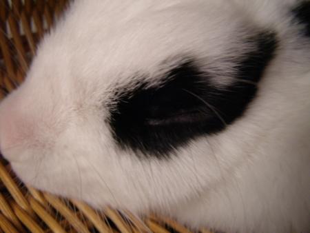 f:id:buchiusagi:20110820003100j:image