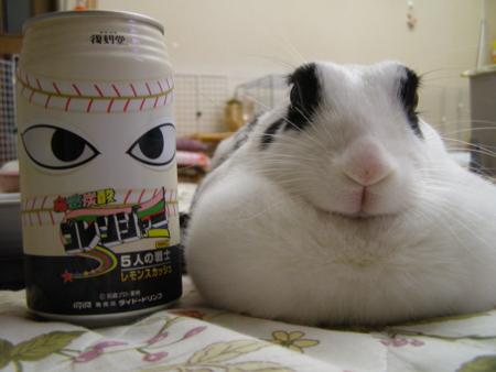 f:id:buchiusagi:20110910180314j:image