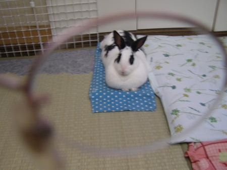 f:id:buchiusagi:20110814075625j:image