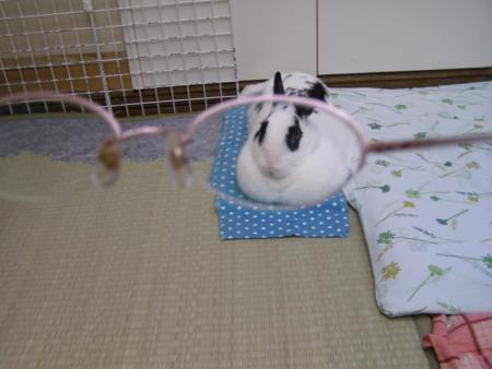 f:id:buchiusagi:20110814075807j:image