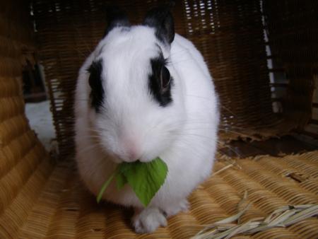 f:id:buchiusagi:20110929195605j:image