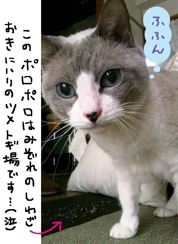 こけしちゃん_e0239908_1332680.jpg