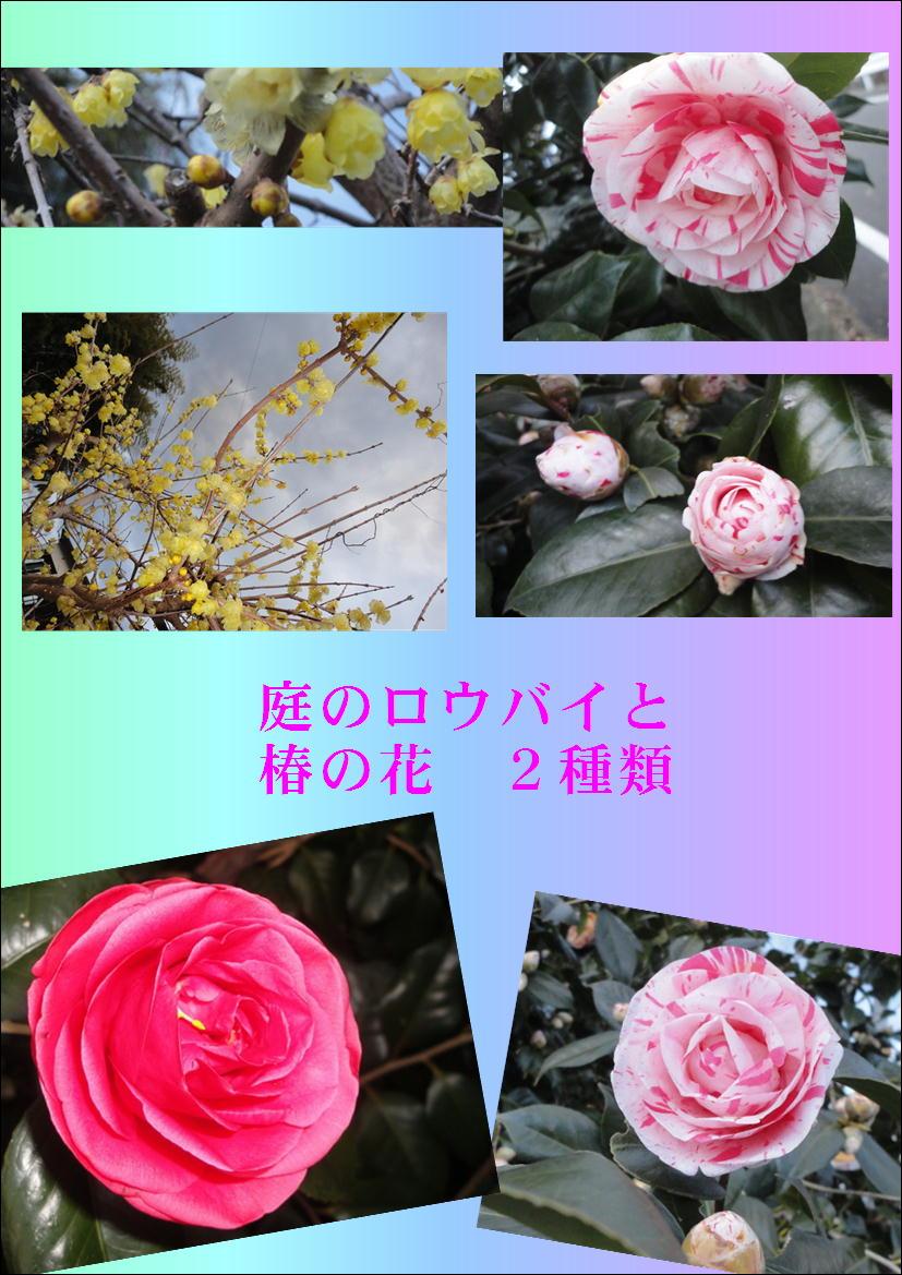 f0231709_1063360.jpg