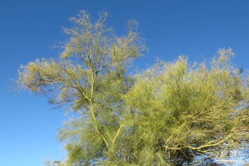 215 Tucson ~AZで新種ゲット~_c0211532_14525884.jpg