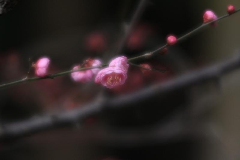 春の兆し_b0190540_1852320.jpg