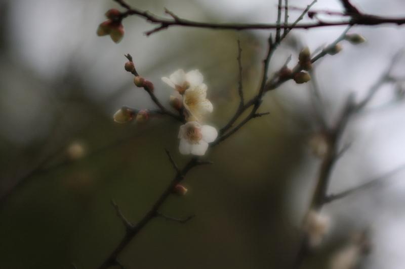 春の兆し_b0190540_18588.jpg