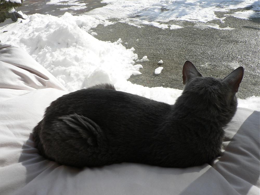 ネコ、雪を眺める_d0001843_2314569.jpg