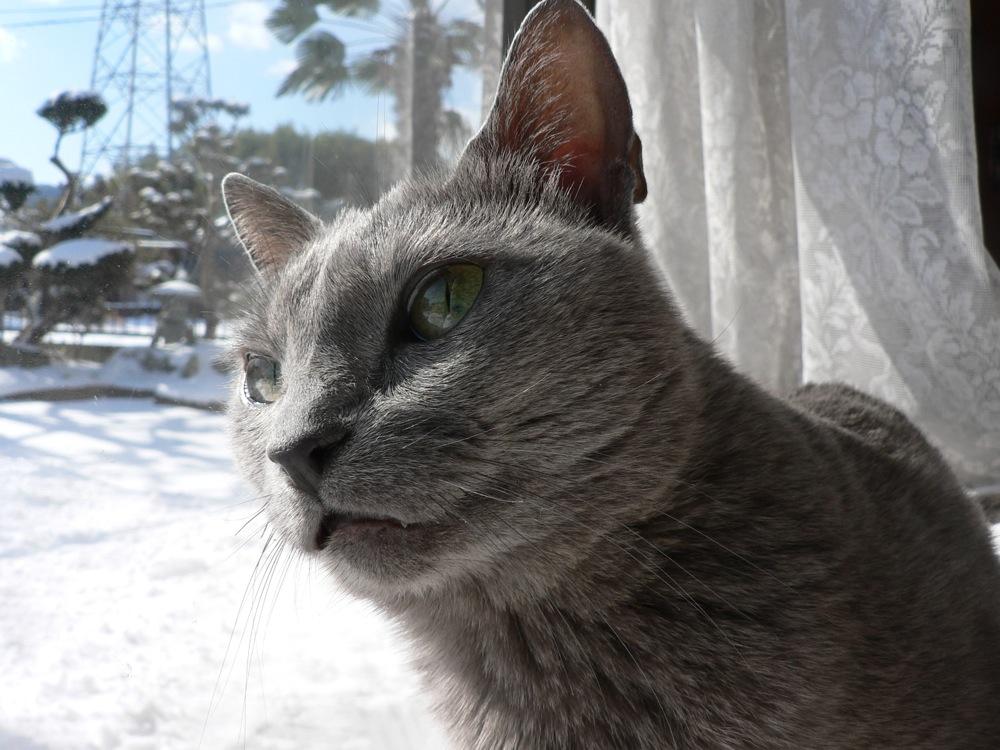 ネコ、雪を眺める_d0001843_2315244.jpg