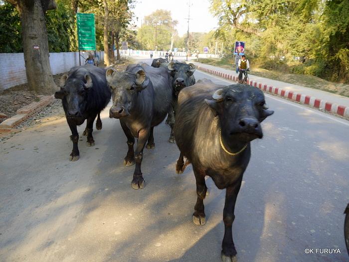 インド旅行記 2 ヴァラナシへ_a0092659_21432950.jpg