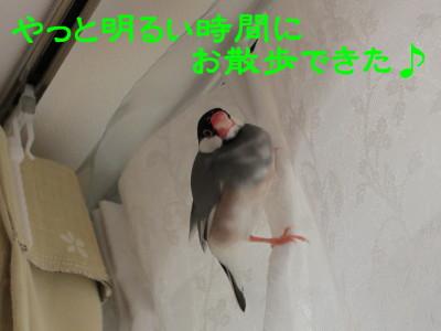 b0158061_20425642.jpg
