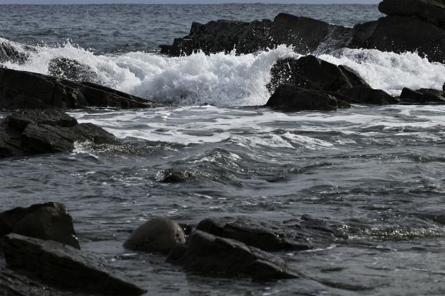 白亜紀浅海堆積物 2_f0018464_21133886.jpg