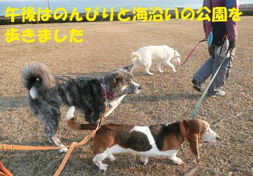 f0121712_20313154.jpg