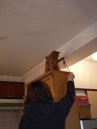 お客さまがやってきた猫 しぇるのぇるろった編。_a0143140_23564414.jpg