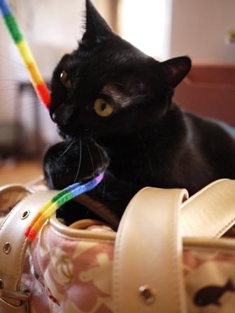 お客さまがやってきた猫 しぇるのぇるろった編。_a0143140_2357112.jpg