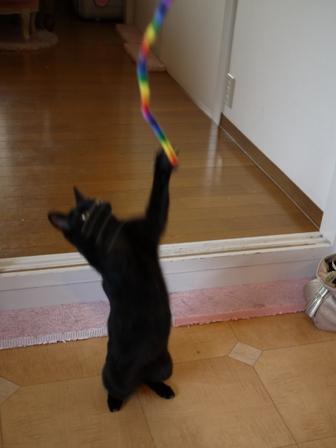 お客さまがやってきた猫 しぇるのぇるろった編。_a0143140_23574122.jpg