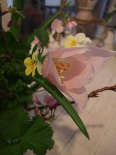 オークリーフ花の教室(それぞれの春を・・)_f0049672_18541955.jpg