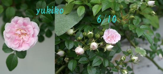 f0166982_21183447.jpg