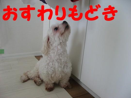b0210702_2013512.jpg