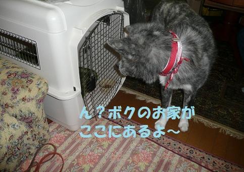f0121712_16473345.jpg