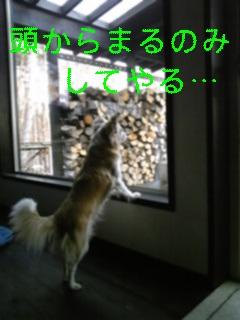 お客様_f0148927_227913.jpg