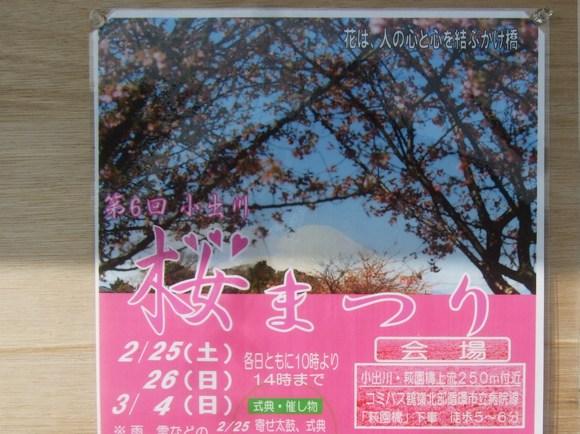 梅も桜も開花しました....もう少しで満開!_b0137932_9322673.jpg