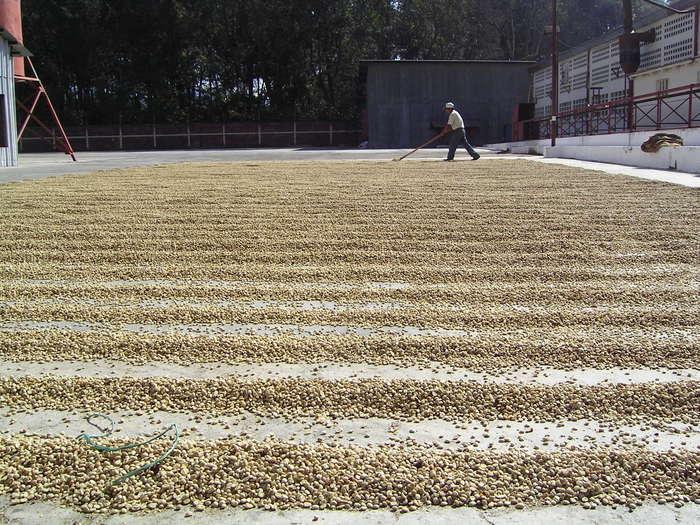 2月のグアテマラは収穫時期です!_a0143042_1135348.jpg