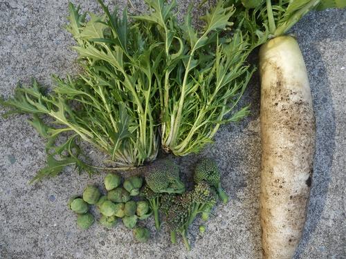 水菜でお鍋_c0053863_2143053.jpg