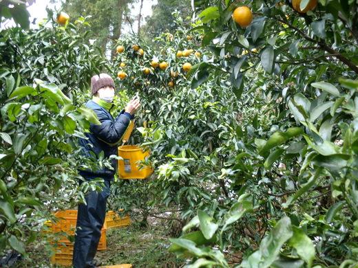 農作業の手伝い_d0251679_22375814.jpg
