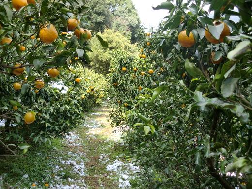 農作業の手伝い_d0251679_22393439.jpg