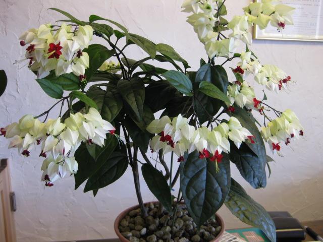 造花ですか?って_a0237010_12352475.jpg