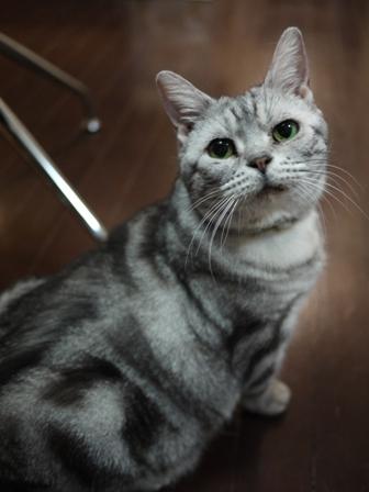 猫のお友だち ひめちゃんシナモンちゃんプーちゃんとのくん編。_a0143140_22595966.jpg