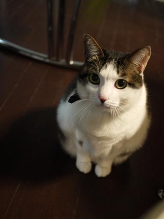 猫のお友だち ひめちゃんシナモンちゃんプーちゃんとのくん編。_a0143140_2332337.jpg