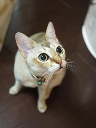 猫のお友だち ひめちゃんシナモンちゃんプーちゃんとのくん編。_a0143140_2375483.jpg