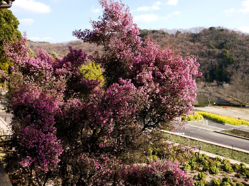 和歌山県植物公園緑花センター _b0093754_2263538.jpg