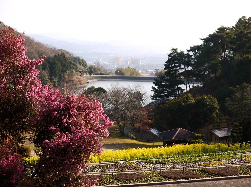 和歌山県植物公園緑花センター _b0093754_2265352.jpg