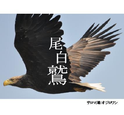 絶滅危惧種・未完成フォトブック。_b0165760_202542100.jpg