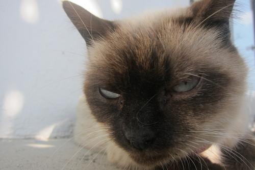 tanuko\'s angry._c0153966_101957.jpg