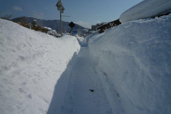 雪景色に驚嘆②_d0030373_21232382.jpg
