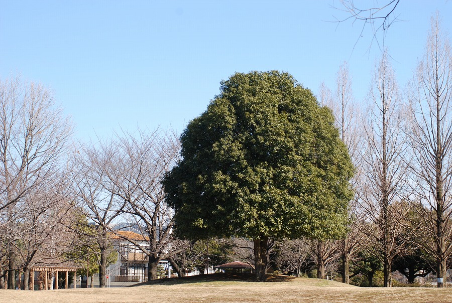 公園はまだ冬枯れの中_c0187781_045931.jpg