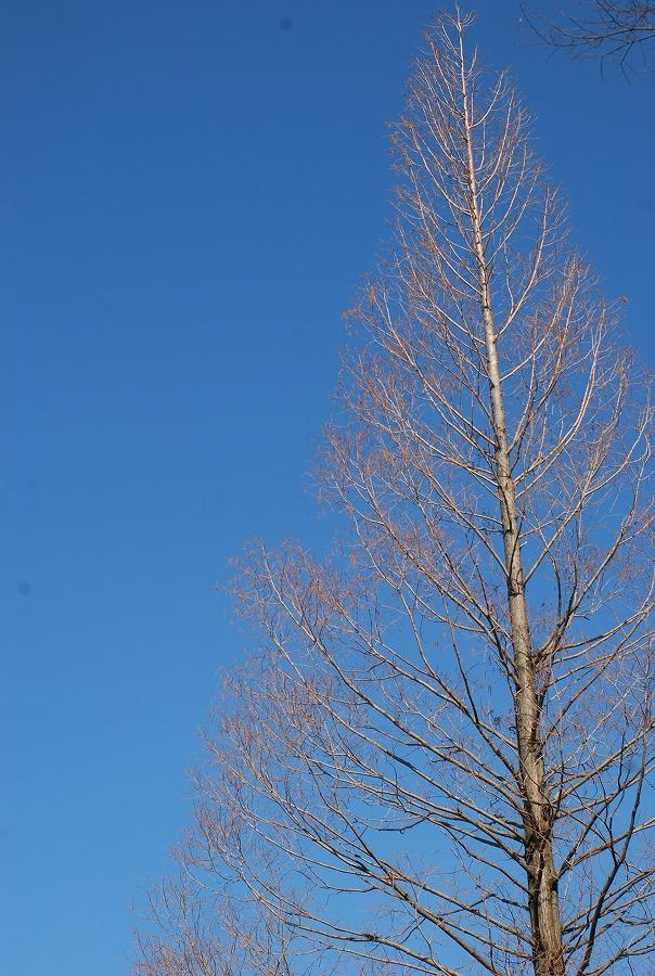 公園はまだ冬枯れの中_c0187781_052211.jpg