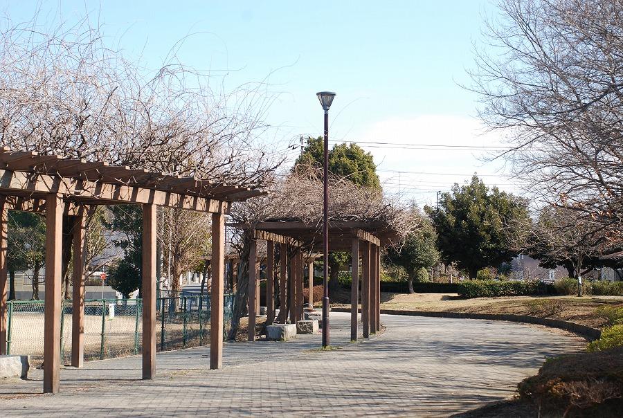 公園はまだ冬枯れの中_c0187781_05454.jpg