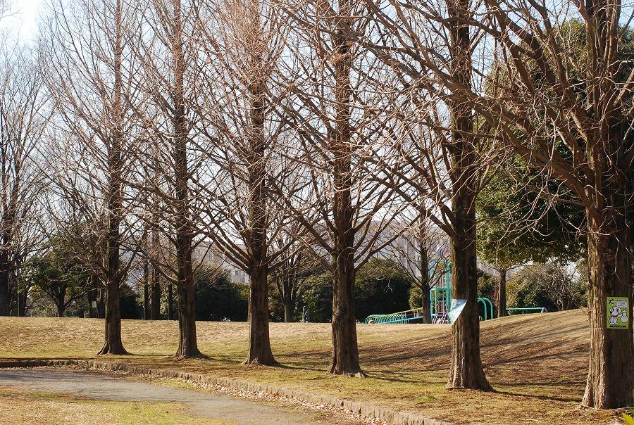 公園はまだ冬枯れの中_c0187781_061673.jpg