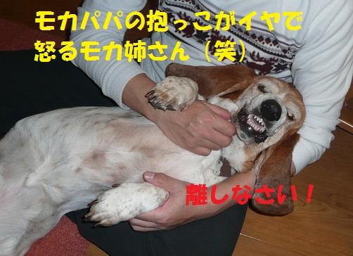 f0121712_160292.jpg