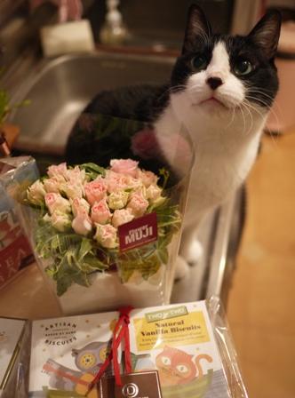 チョコレートの日猫 空編。_a0143140_21262235.jpg