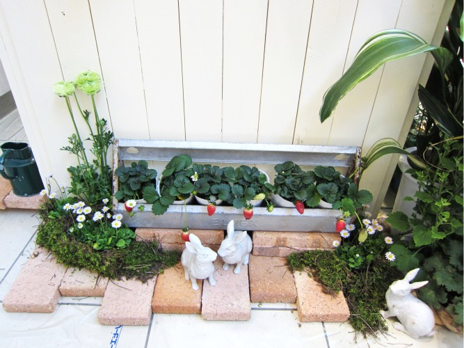 第4回パンジー・ビオラ個人育種家の展示会・最終日のお客様は花咲かじいさんそして、東京、山梨から_b0137969_18101161.jpg