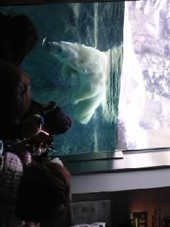 雪の動物園_b0097073_20305617.jpg