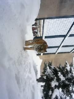 雪の動物園_b0097073_20305651.jpg