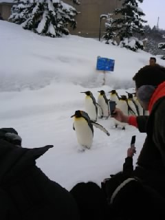 雪の動物園_b0097073_20305683.jpg