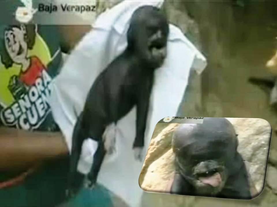 ナイジェリアで「人+羊」のキメラが誕生した!?:地球が「キメラ王国」になる日?_e0171614_214142100.jpg